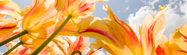 flowerspring_banner 2